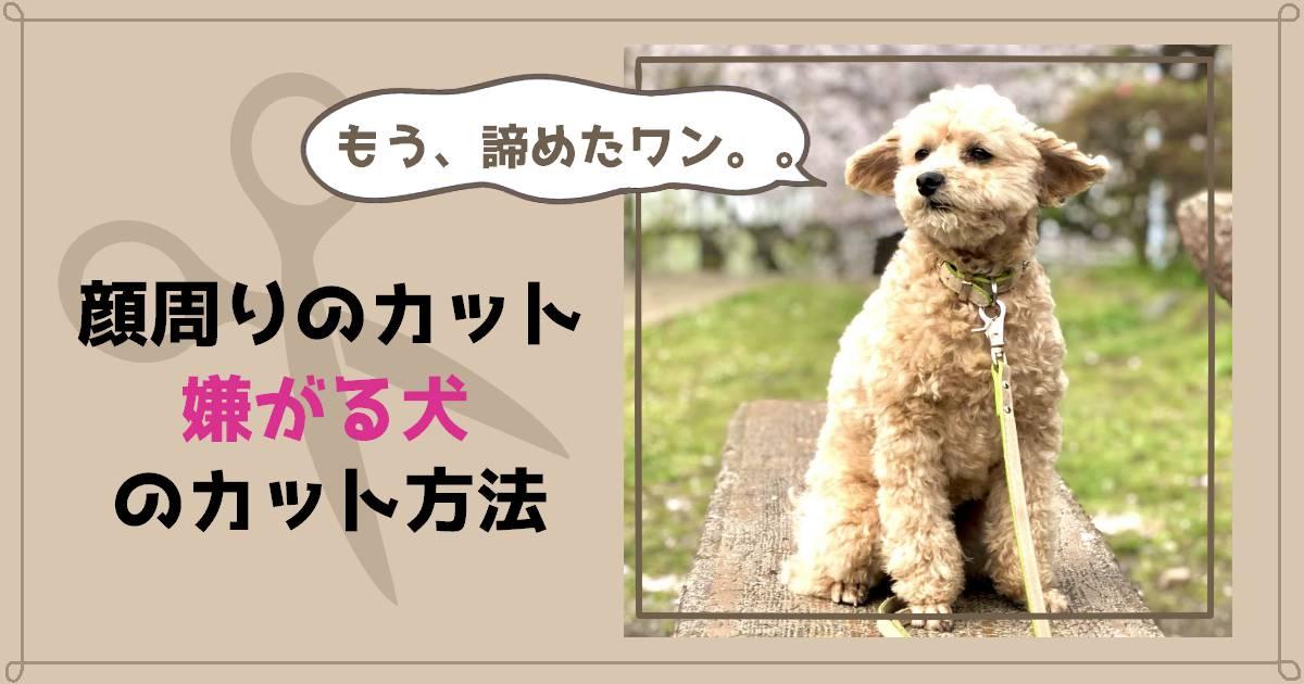 顔周りのカット 嫌がる犬のカット方法