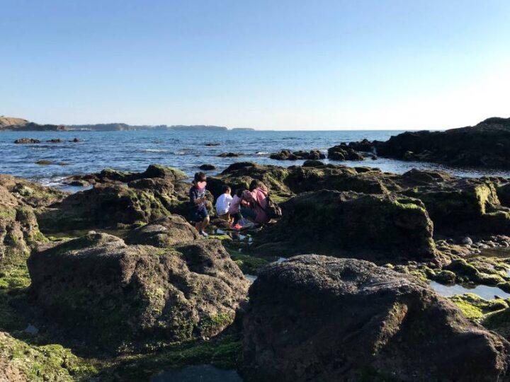 和田長浜海岸 磯遊び2