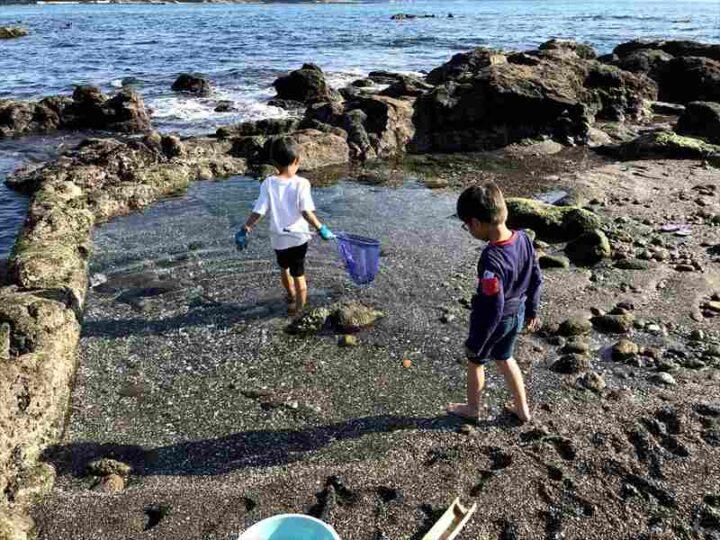 和田長浜海岸 磯遊び