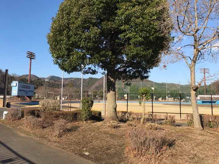 田代運動公園5