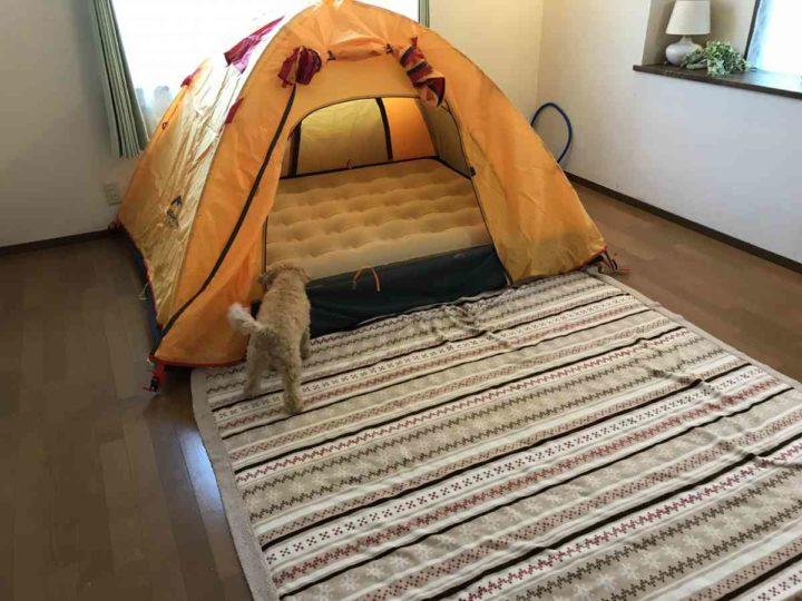 部屋キャンプ 犬