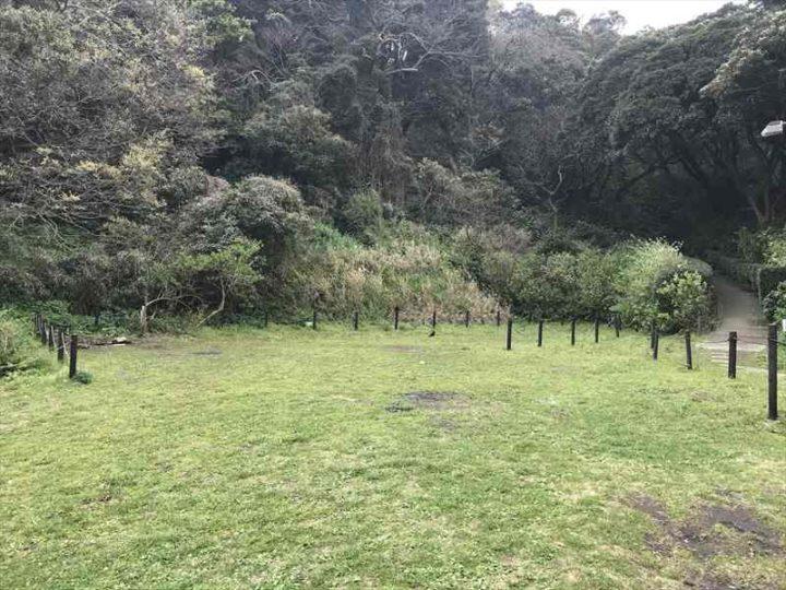 観音崎公園 バーベキューエリア 平坦な芝