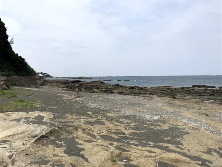 油壺 荒井浜 野営地4-2