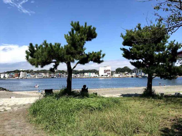 城ヶ島 白秋碑苑 松の木