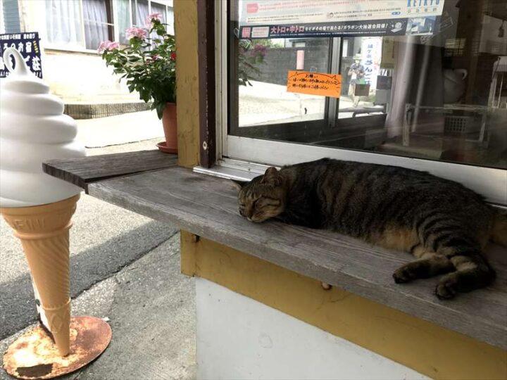 城ヶ島西側 バーベキューおすすめスポット 猫