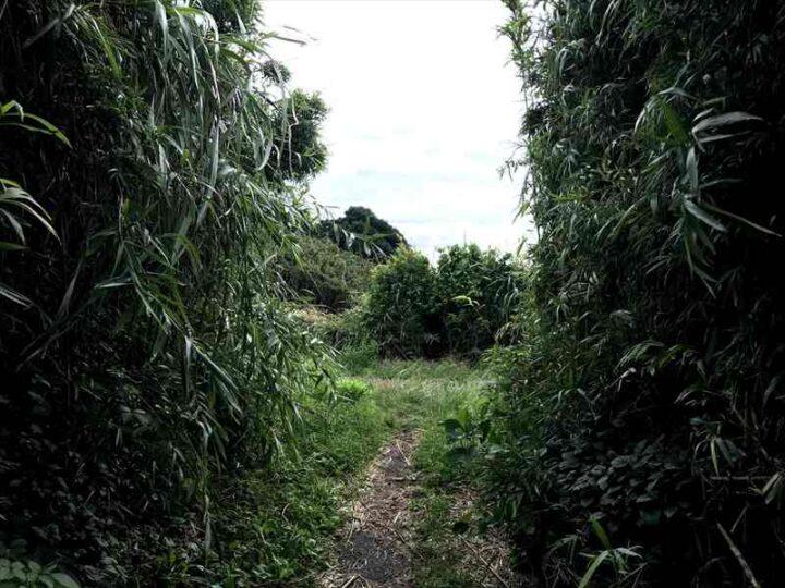 城ヶ島 馬の背洞門への道2