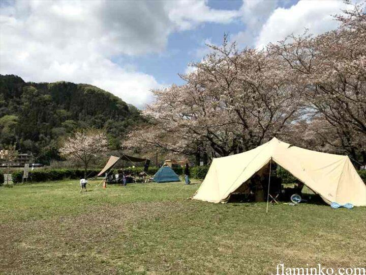 上大島キャンプ場 桜がきれいな芝サイト