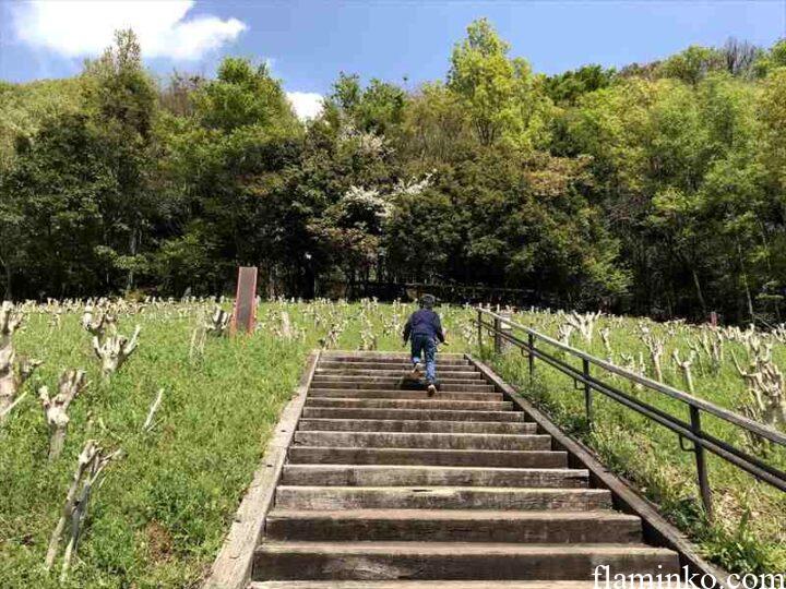 上大島キャンプ場 展望台へ