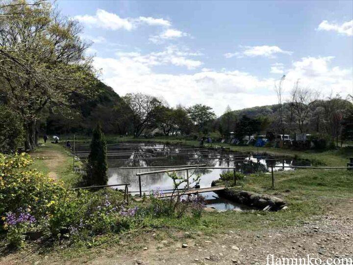 上大島キャンプ場 釣り堀