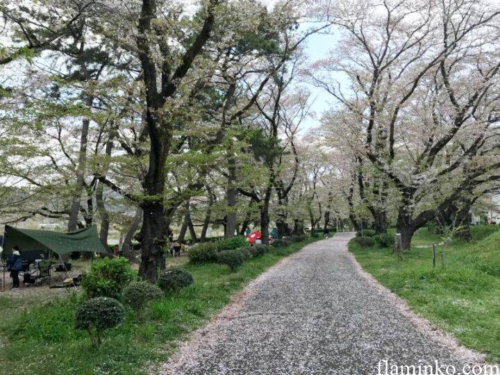 上大島キャンプ場 桜の道